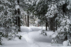 Snowshoe trail Royalty Free Stock Photography