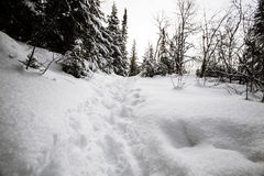 Snowshoe trail quebec Royalty Free Stock Photo