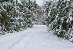 Snowshoe trail. Through a snow covered forest Royalty Free Stock Photography