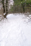 Snowshoe trail. Snow covered forest trail with snowshoe tracks upstate rural New York Stock Photos