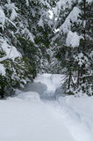 Snowshoe trail in the woods. In New Brunswick Stock Photos