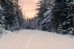 Snowshoe trail Royalty Free Stock Photos
