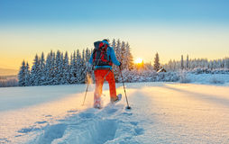 Free Snowshoe Walker Running In Powder Snow Royalty Free Stock Image - 84186856