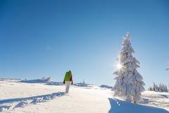 snowshoeing在一个清楚的晴天的活跃妇女通过一棵冻积雪的杉树 免版税库存照片