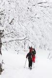 Snowshoeing在森林里 免版税库存照片