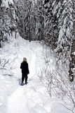snowshoeing的森林 免版税库存图片
