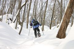 Snowshoeing. A woman snowshoes through the woods Stock Images