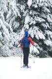 Snowshoeing Imagem de Stock