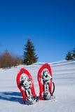 snowshoeing canada fotografii Quebec śniegu snowshoeing karple Fotografia Royalty Free