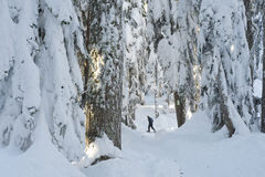 Snowshoeing among snow covered trees on Cypress Mountain Stock Images