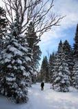 Snowshoeing in de winterlandschap Royalty-vrije Stock Fotografie