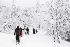 Snowshoeing en un bosque Imagenes de archivo