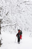Snowshoeing in a forest. Group of people with backpacks walking with snowshoes in a forest covered with snow in the Monts-Valin National Park in Quebec Canada Royalty Free Stock Photos