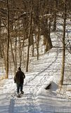 Snowshoeing on the Forest Trail. Man snowshoes along trail through wooded area stock photography