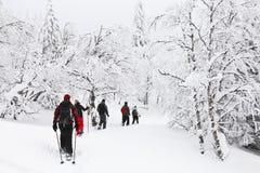 Snowshoeing i en skog Arkivbilder