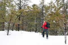 Snowshoeing in Killarney Provincial Park, Ontario. An active male explores the Granite Ridge Trail on snowshoes in Killarney Provincial Park. This area on the royalty free stock photo