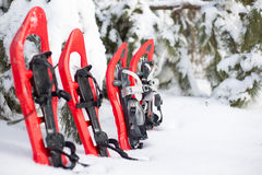 snowshoeing Snowshoes na neve Imagem de Stock Royalty Free