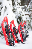snowshoeing Snowshoes na neve Fotografia de Stock Royalty Free