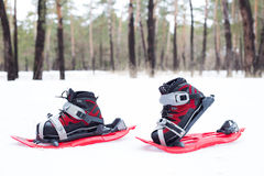 Snowshoeing. Snowshoes in the snow. Stock Images