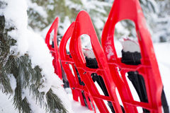 Snowshoeing. Snowshoes in the snow. Stock Photos