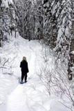 Snowshoeing Wald Lizenzfreies Stockbild