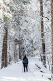 Snowshoeing on a winter trail Stock Photos