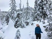 Snowshoer chodzi oszałamiająco piękno zima krajobraz na Cyprysowej górze i podziwia obrazy royalty free