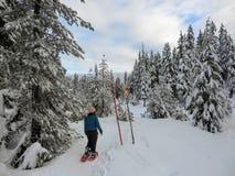 Snowshoer chodzi oszałamiająco piękno zima krajobraz na Cyprysowej górze i podziwia fotografia royalty free