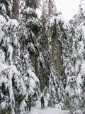 Snowshoer chodzi oszałamiająco piękno zima krajobraz na Cyprysowej górze i podziwia obraz royalty free
