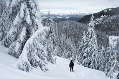 Snowshoer na Czarnym Halnym snowshoe śladzie Zdjęcie Stock