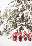 Snowshoes в лесе Стоковые Изображения RF