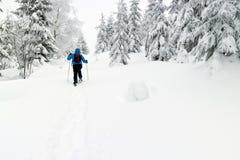 snowshoes человека стоковые изображения rf
