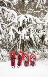 Snowshoes in the forest. Royalty Free Stock Images