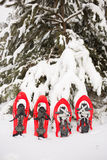 Snowshoes in the forest. Royalty Free Stock Image