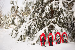 Snowshoes in the forest. Stock Image