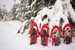Snowshoes in the forest. Stock Photos