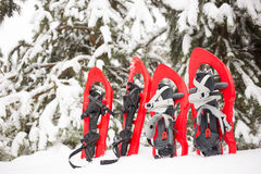 Snowshoes in the forest. Royalty Free Stock Photography