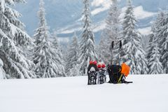 Snowshoes in funny sunglasses. Avalanche shovel and other equipment stand among the deep snow on the background of huge pine trees - winter adventure begins royalty free stock photo