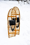 Snowshoes standing in snow Stock Images