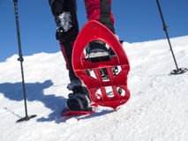 Snowshoes to walk on the snow. Royalty Free Stock Photo