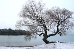 Snowsikt av laken Wakatipu Arkivbilder