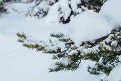 Snowsnow在冬天 免版税库存图片