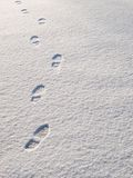 Snowsteps Royalty Free Stock Photography