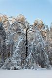 After snowstorm. Royalty Free Stock Photos