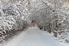 After snowstorm. Stock Photos