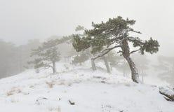 snowstorm Στοκ Φωτογραφίες