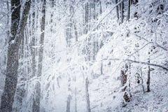 snowstorm Fotos de archivo