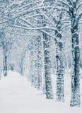snowstorm Foto de archivo