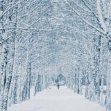 snowstorm Imagen de archivo libre de regalías