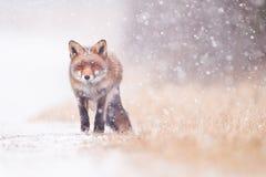 snowstorm Foto de Stock Royalty Free